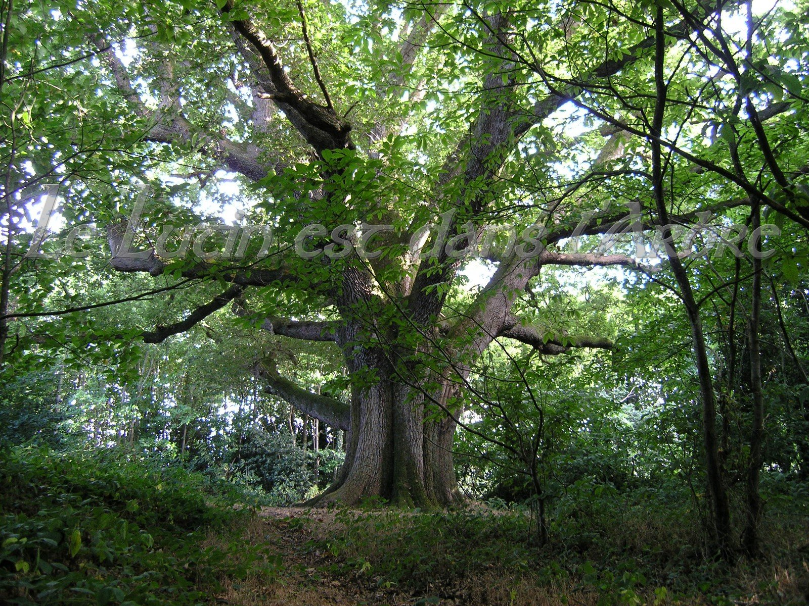 Le lutin est dans l arbre ch ne for De l arbre au meuble
